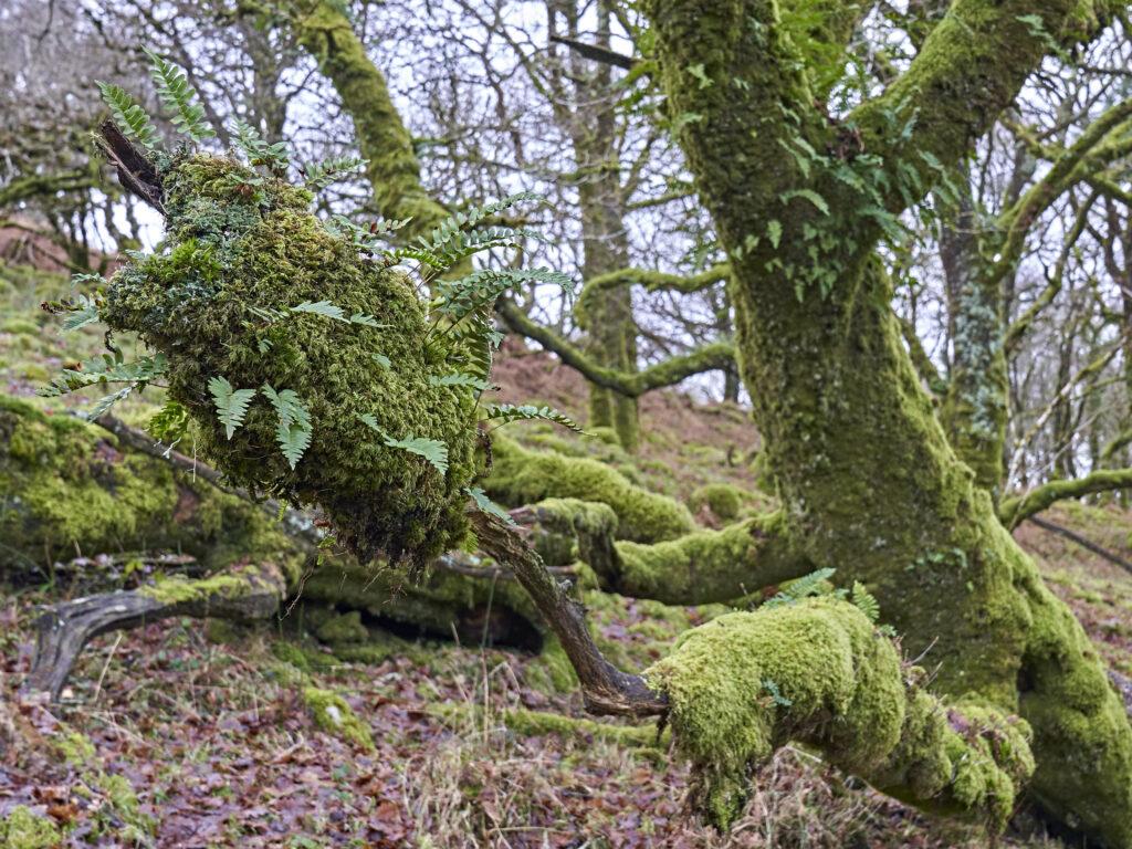 Dartmoor Winter Walk Moss On tree