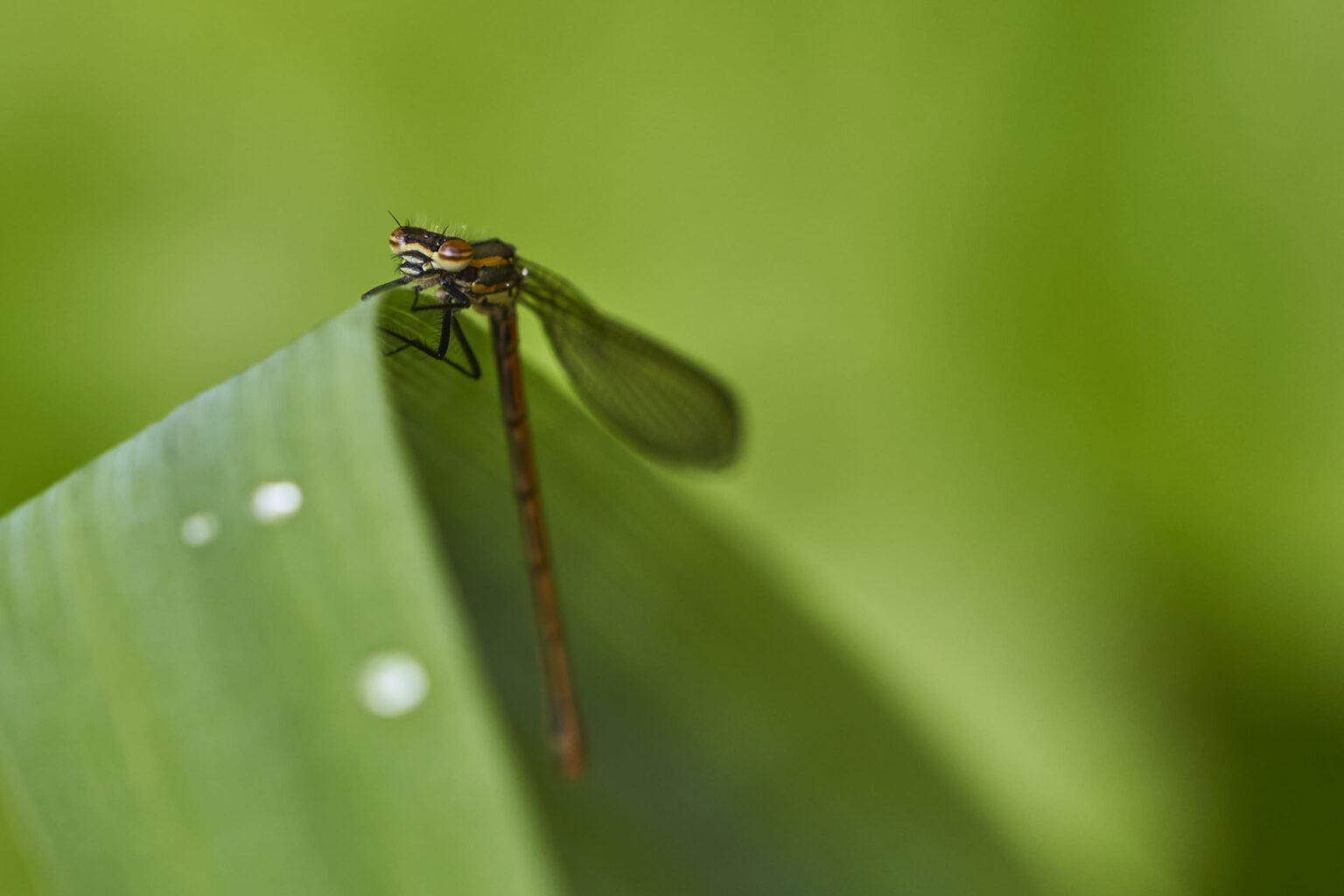 Dragonfly Rests Over Pond II