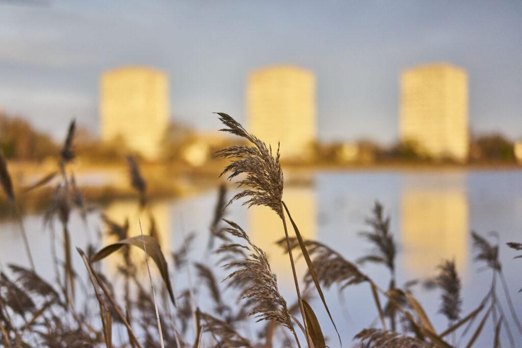 Reeds Woodberry Wetlands