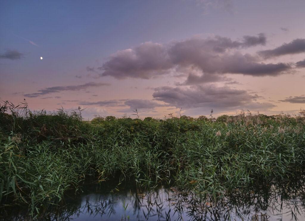 Sunset Woodberry Wetlands on a lockdown adventure